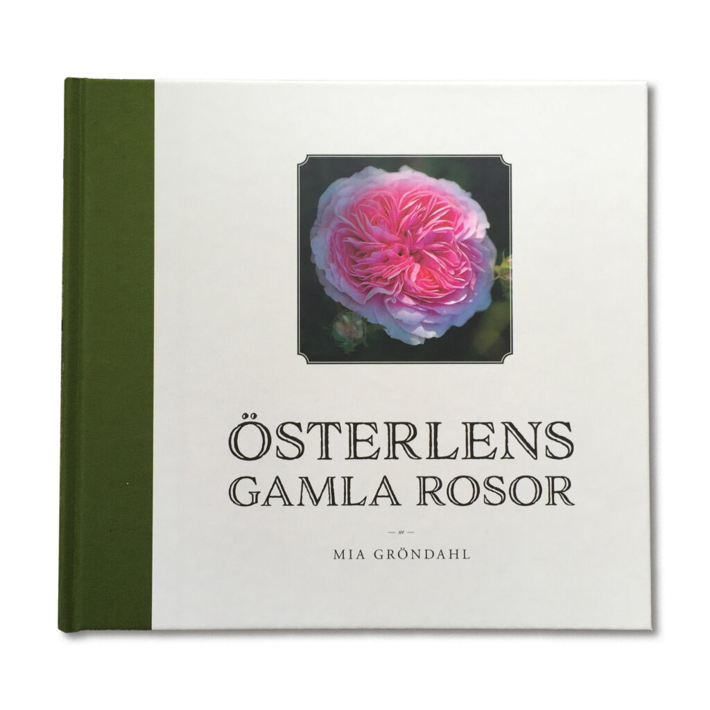 Österlens gamla rosor frilagd