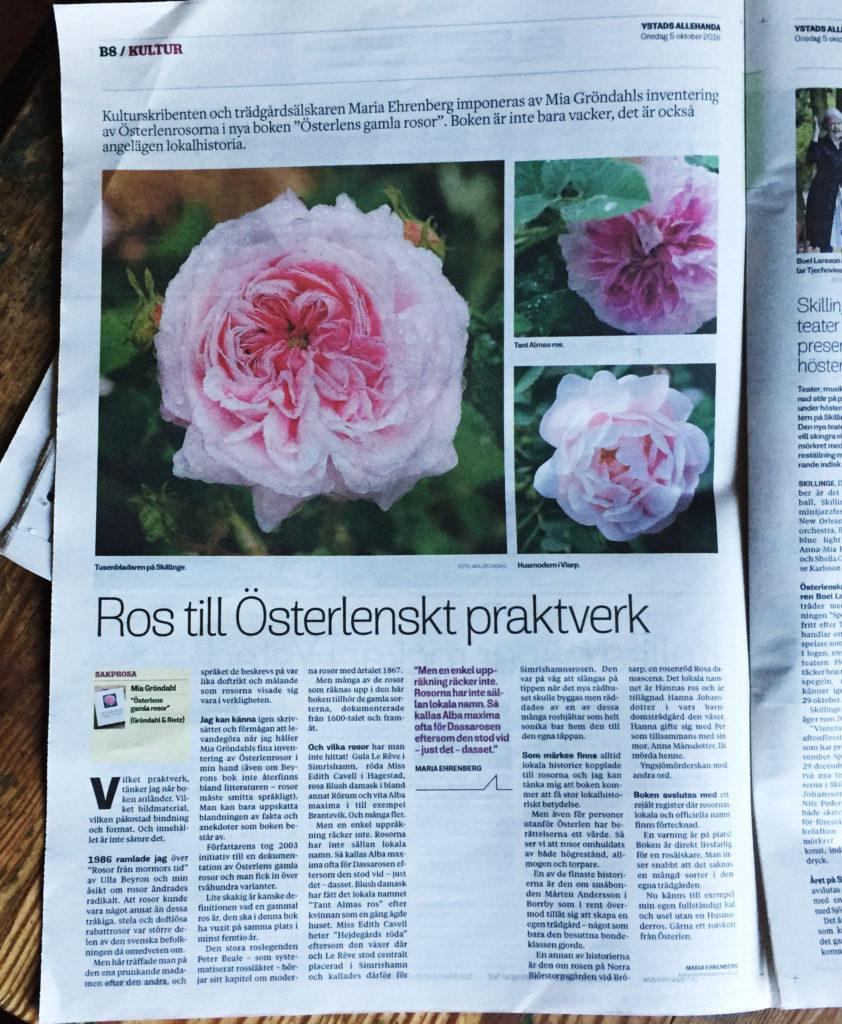 Press & Media: Ystads Allehanda recension av Österlens gamla rosor